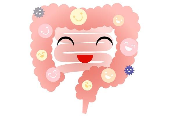 免疫機能の8割は腸にある!健康のカギを握る善玉菌