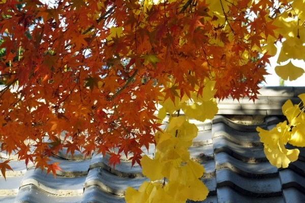 京都 紅葉 永観堂 駐車場