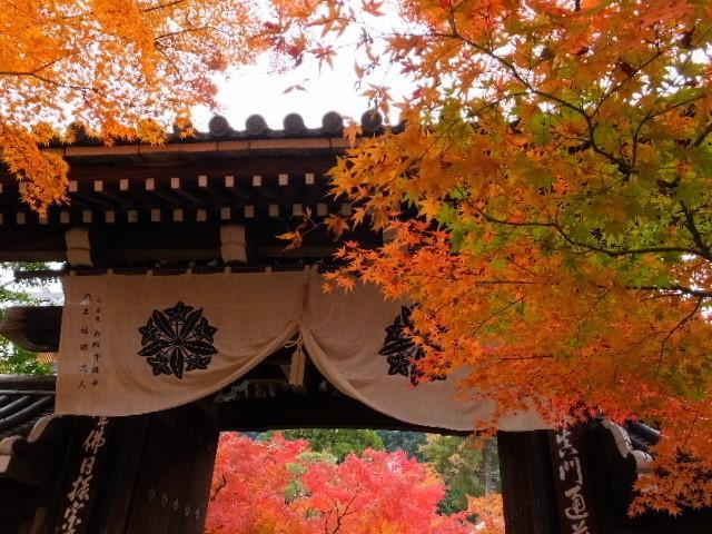 京都 紅葉 見頃 永観堂