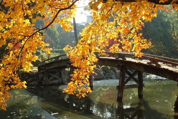 京都 紅葉 見頃 いつ