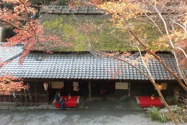 京都 紅葉 見頃 例年