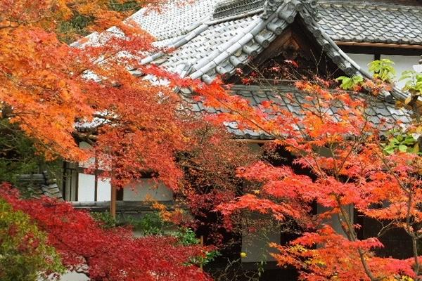 京都 紅葉 永観堂 周辺