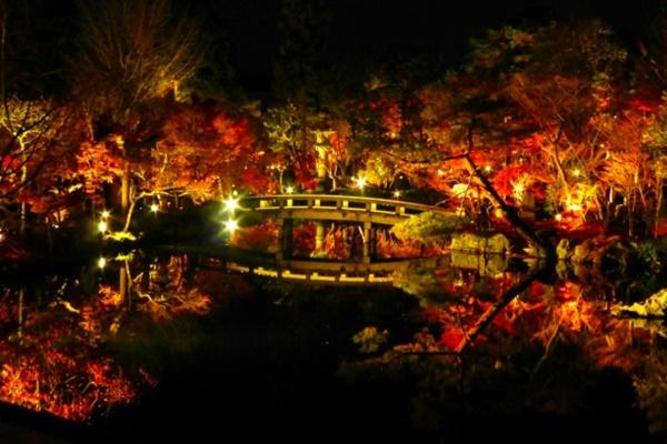 京都 紅葉 穴場 ライトアップ