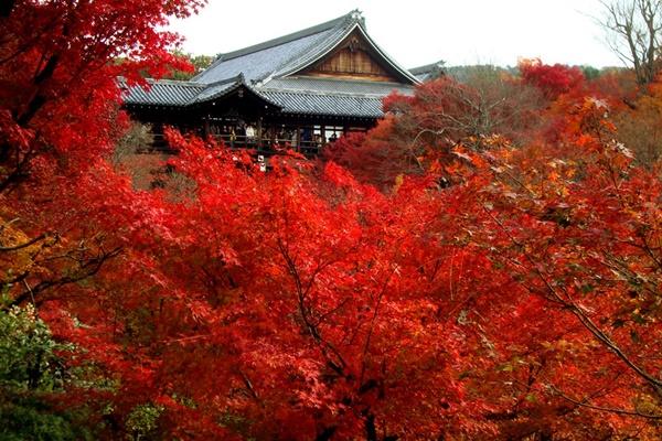 京都 紅葉 東福寺